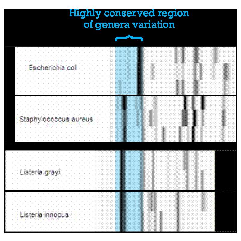 datagram2
