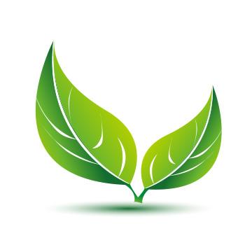 Image of Green Leaf